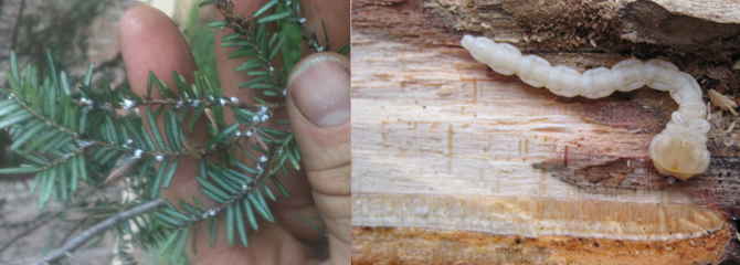 diagnosing and treating tree problems